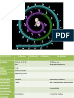 Desenvolvimento Fetal