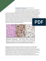 Immunostains for b Catenin