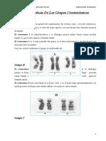 Caracteristicas de Los Grupos Cromosomicos