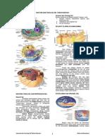 102349828-Anatomi-Dan-Fisiologi-Sel-Tubuh-Manusia.pdf