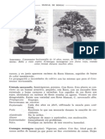 Libro Manual de Bonsai Anne Swinton 172