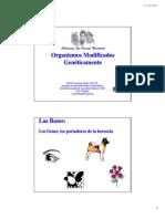 Organismos Modificados