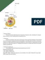 Struktur Sel Dan Fungsinya