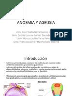 Otorrino Ageusia y Anosmia