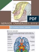 Nervios Craneales I , II y V