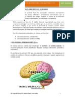 U1. FISIOPATOLOGÍA DEL SNC.pdf