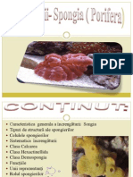 Spongierii- Spongia ( Porifera)
