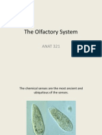 ANAT 321 the Olfactory System