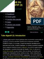 Histologie Du Tube Digestive