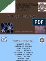Sistema Nervioso Anatomia Humana1
