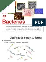 Bacterias de Raul