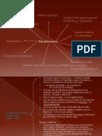 Doc-fil renacimiento-FMM-2014.ppt