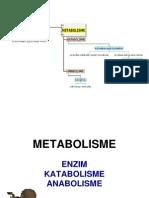 Metabolisme XII IPA