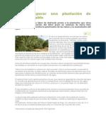 Cómo Preparar Una Plantación de Olivos Rentable