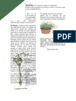 Organografia Vegetal /