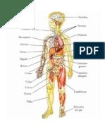 Imagenes sistema esqueletico