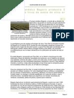 El Grupo Andaluz Bogaris Producirá 2 Millones de Litros de Aceite de Oliva en Chile