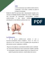 La neuropsicología.