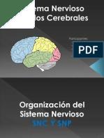 Unidad 1 Neuropsicologìa.ppt