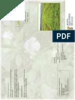 lemonBalm.pdf