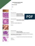 Skin Pathology Practice Sheet