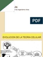4. La celula