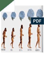 03 人类进化图