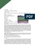 Tumbuhan Monokotil Dan Dikotil