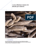 Bacterias de yuca eliminan cianuro de agua contaminada por mineria.docx