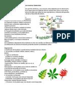 Características Generales de Las Plantas Terrestres