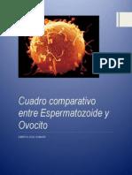Cuadro Comparativo Entre Ovocito y Espermatozoide
