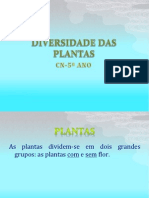 Constituição das plantas