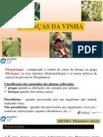 DOENÇAS DA VINHA.pptx