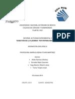 Informe Actividad Experimental 3