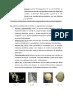 Investigo Sobre La Reproducción en Las Plantas