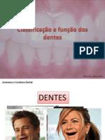 Aula3_classificação Dos Dentes_representação Grafica