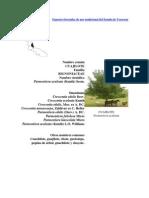 Especies forestales de uso tradicional del Estado de Veracruz.docx