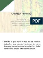 Carrizo y Bambú