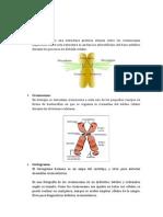 cromosomas