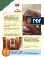 Palm Oil and the Orangutans