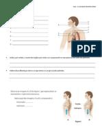 SISTEMA RESPIRATÓRIO TESTE.pdf