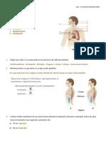 SISTEMA RESPIRATÓRIO CORREÇÃO.pdf