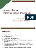 Selaput Plasma (Membran Sel Dan Dinding Sel)