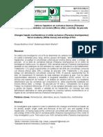 Cambios morfométricos hepáticos en cachamas blancas (Piaractus brachypomus) alimentadas con morera (Morus alba) y ensilaje de pescado
