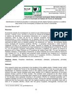 Identificación de parásitos intestinales en el primate neotropical Ateles hybridus en un centro de paso de fauna en el municipio de Sabana de Torres en Santander