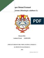 238135982-muntingia-calabura
