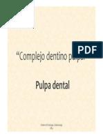 Clase 12º - Pulpa
