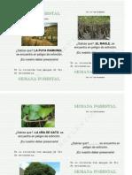Afiches de Senama Forestal Imprimir