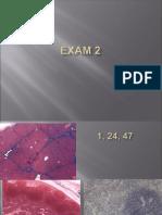 exam 2answers