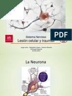 Patología Especial Nervioso